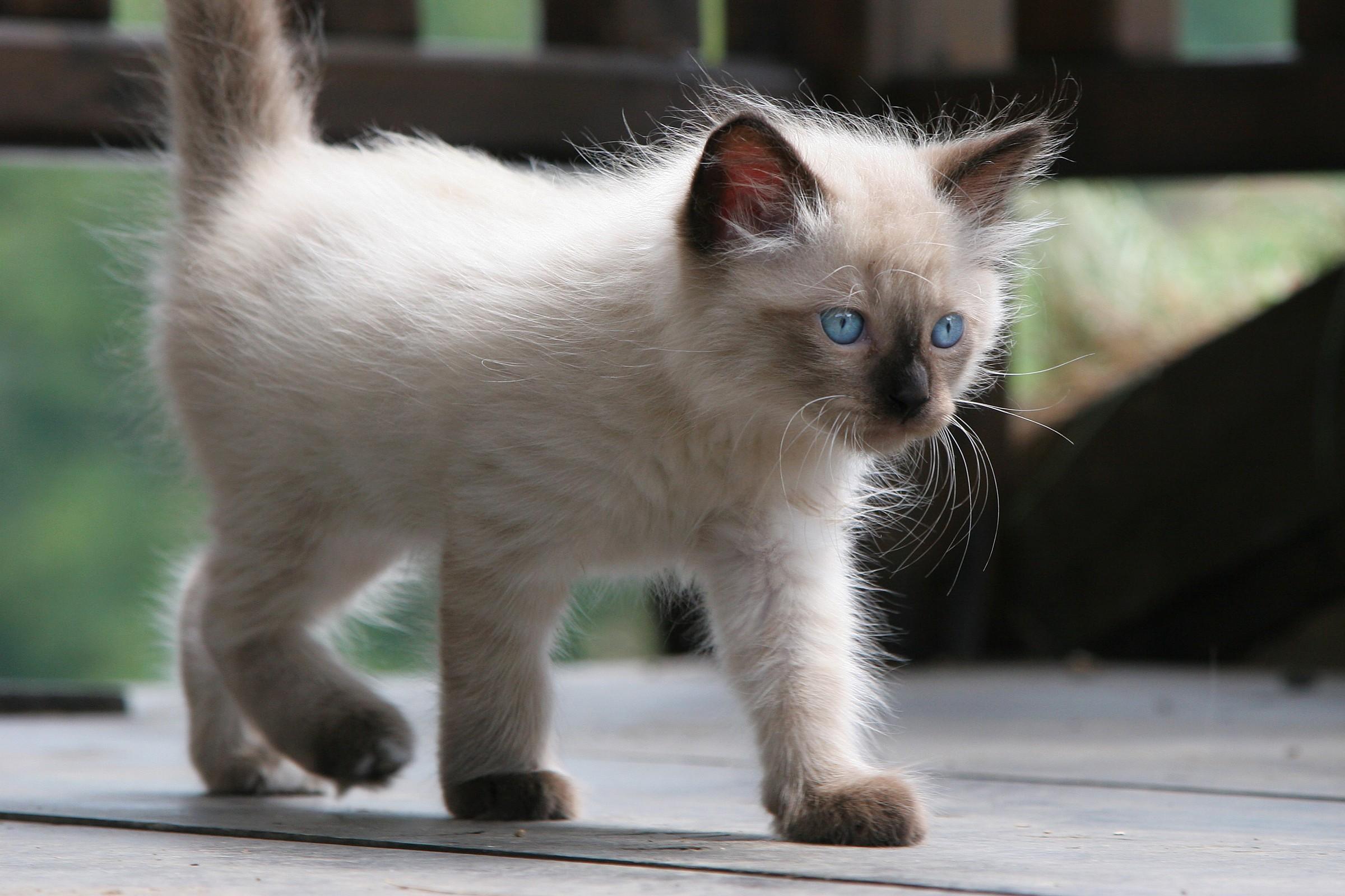 Cat 1...