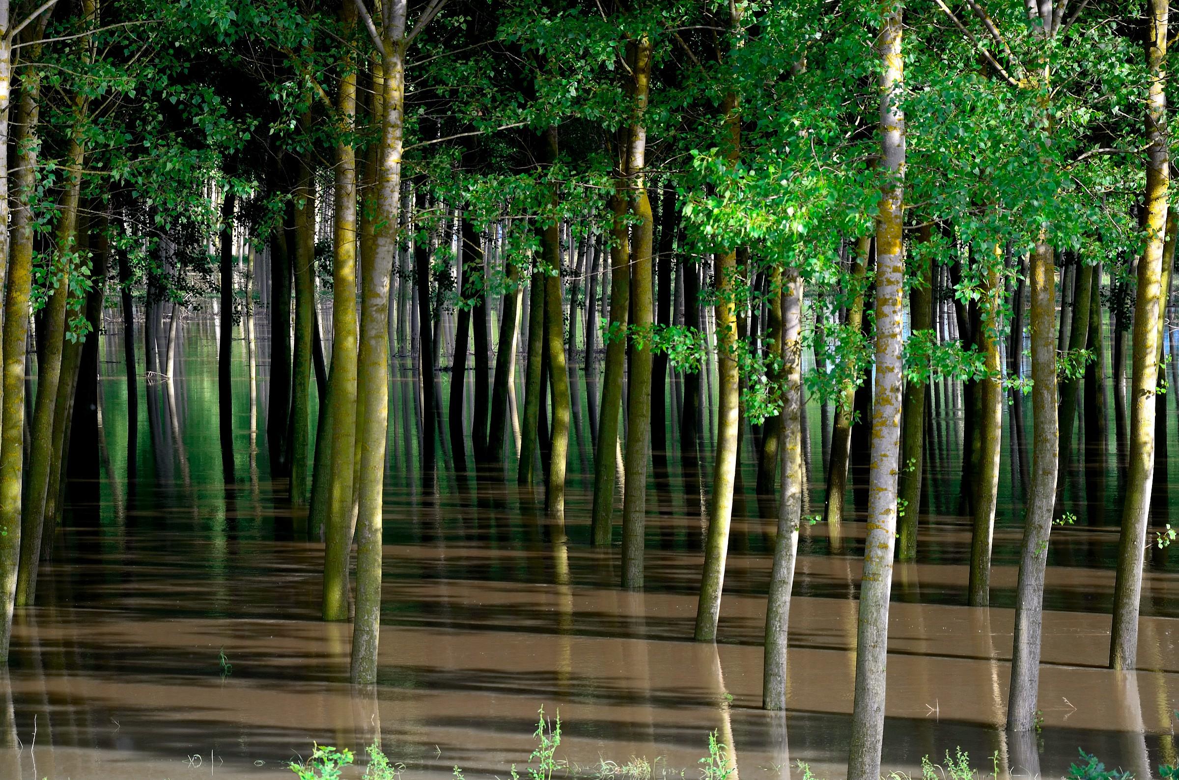The full flood plain of the Po...