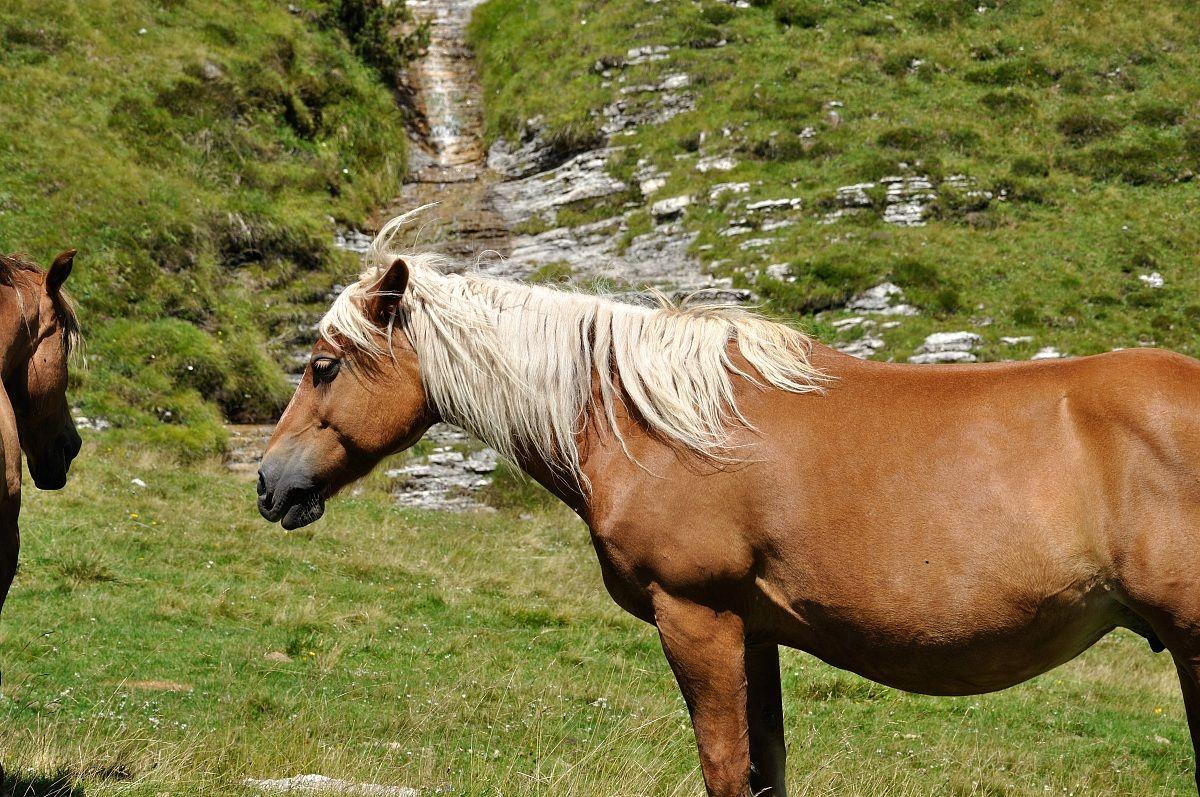 Piani eterni cavalli al pascolo juzaphoto for Piani domestici sostenibili