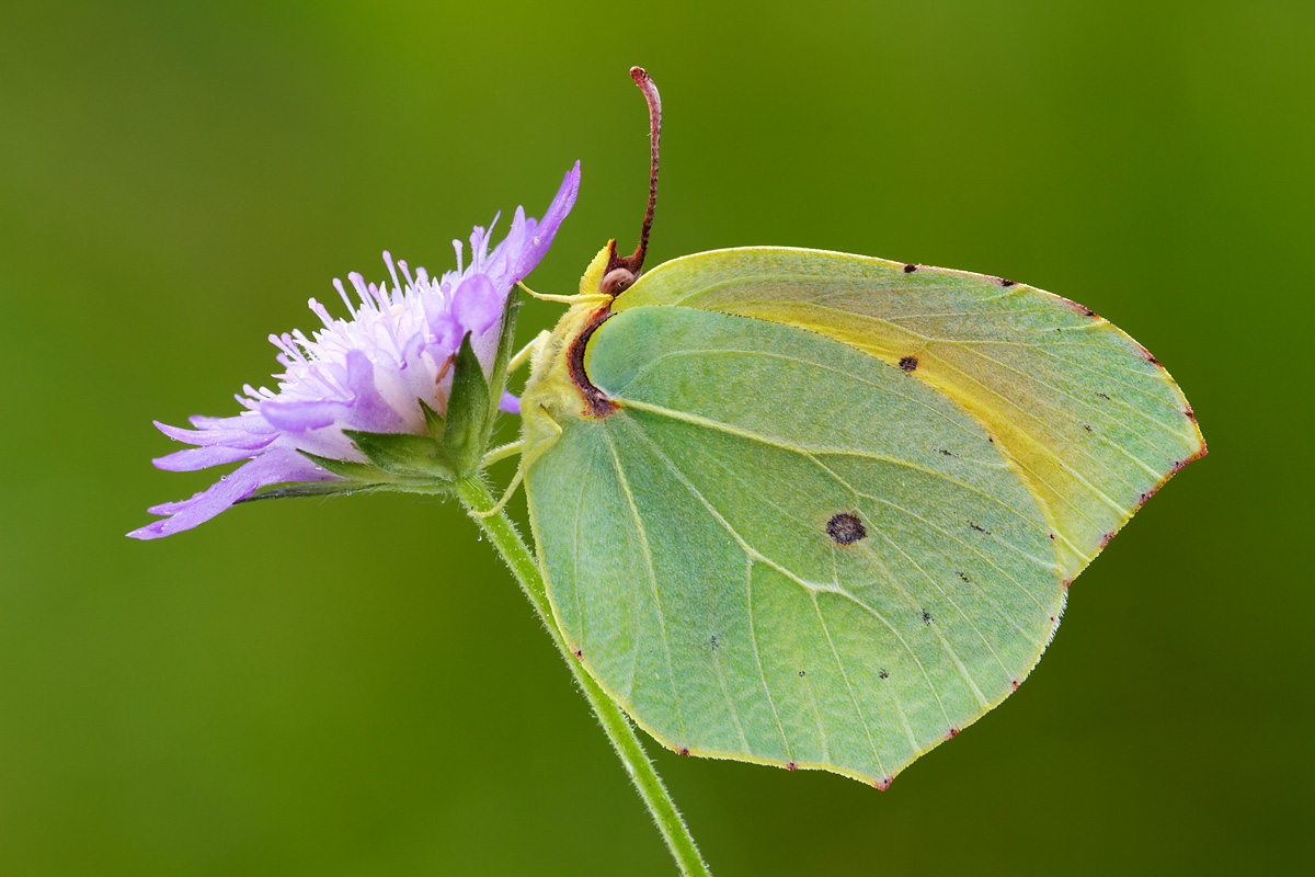 butterfly leaf...