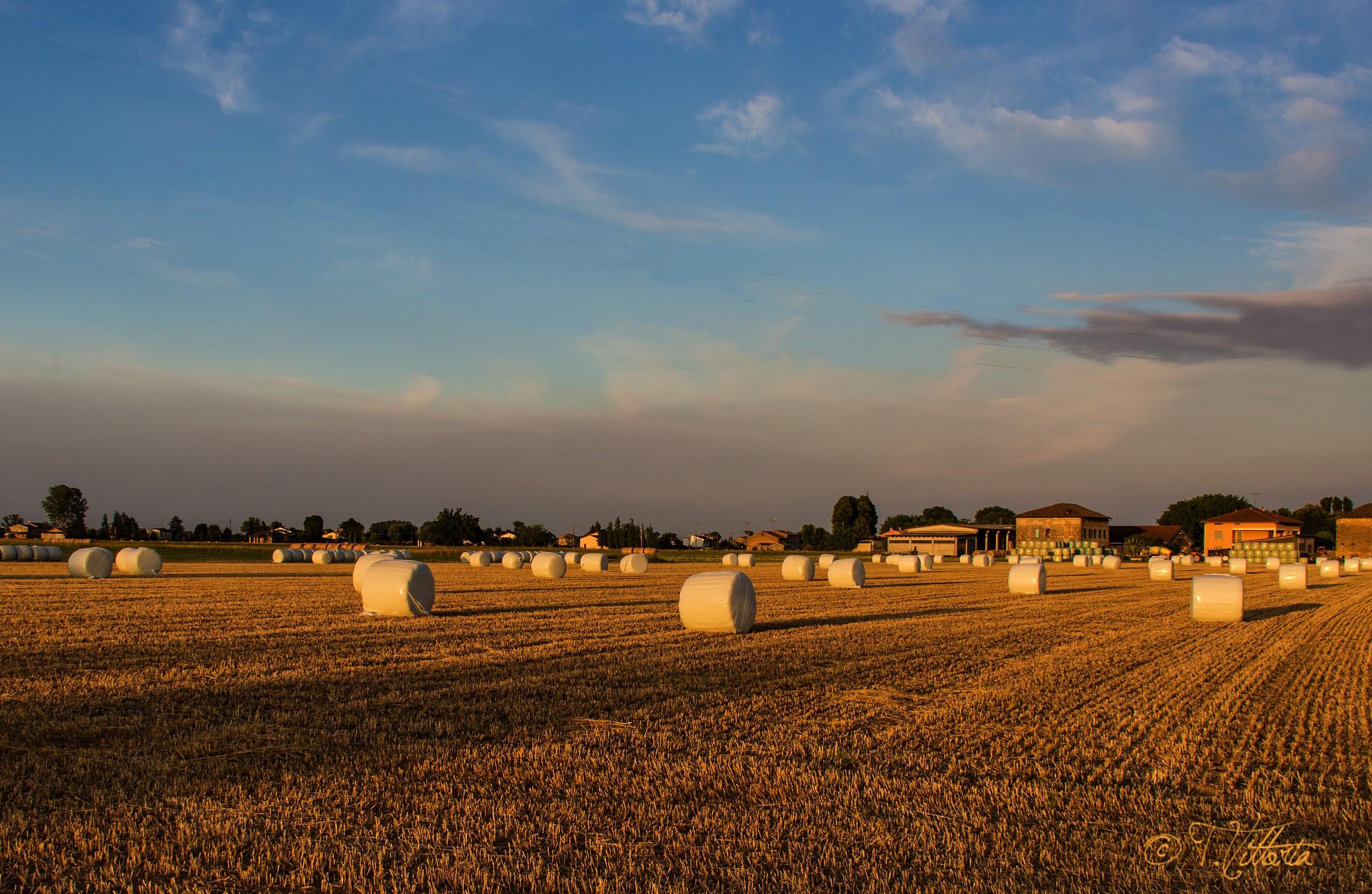 Bales of hay...