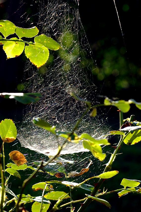 The web...
