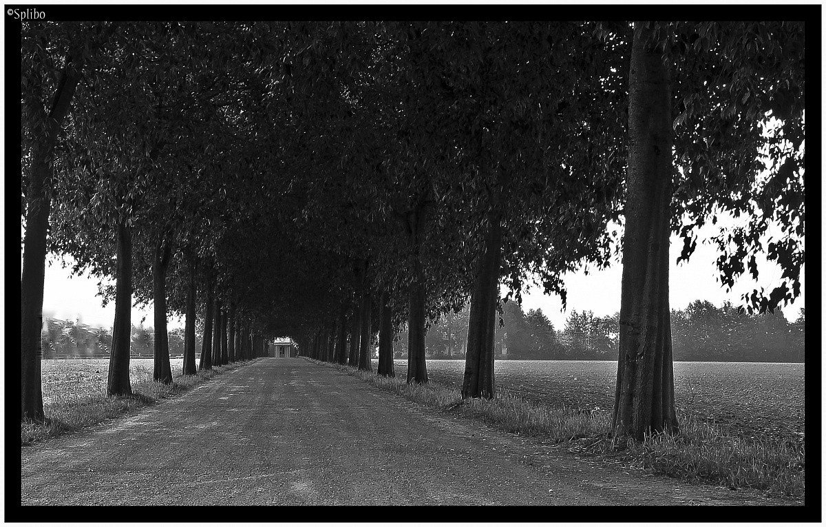 Avenue of Trees...