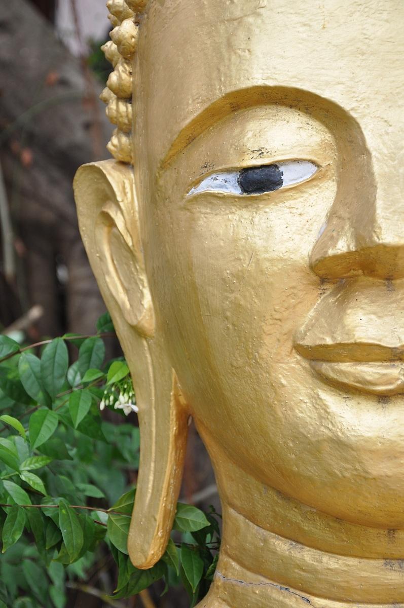 Buddha profilo I...