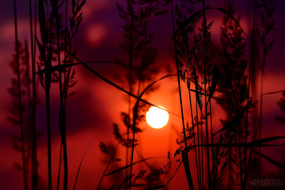 Sun )...