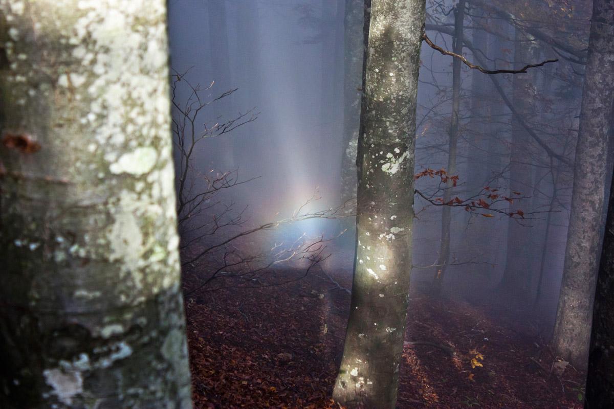 Rainbow in the woods...