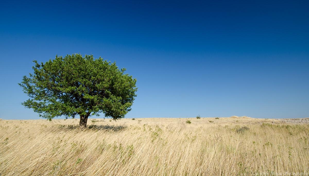 Country Gargano...