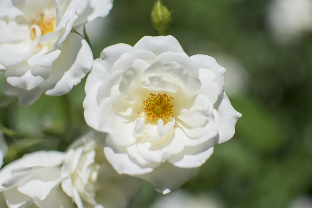 White Flower...