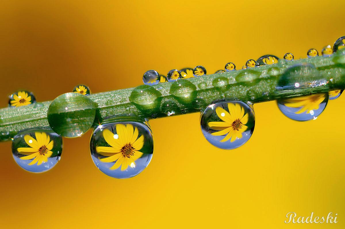 Riflessi nelle gocce d 39 acqua by radeski juzaphoto for Finestra con gocce d acqua