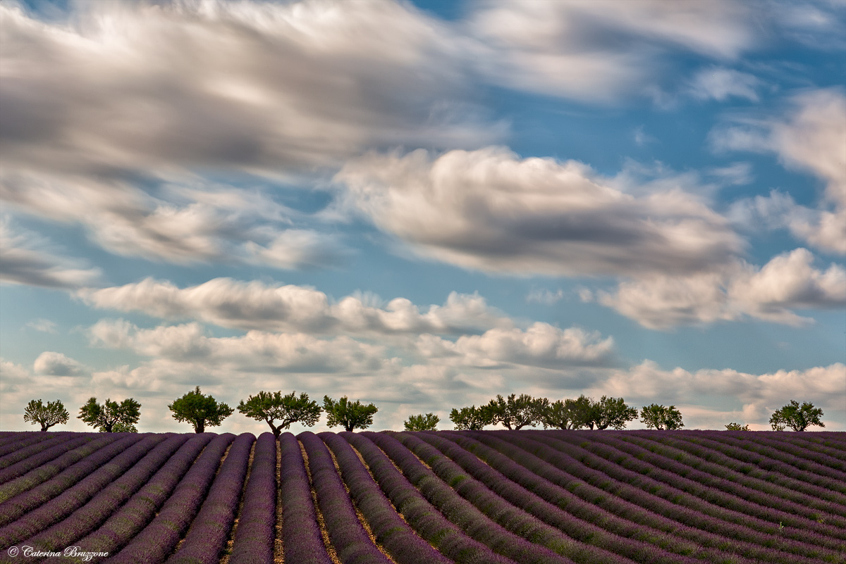 Lavender and clouds...