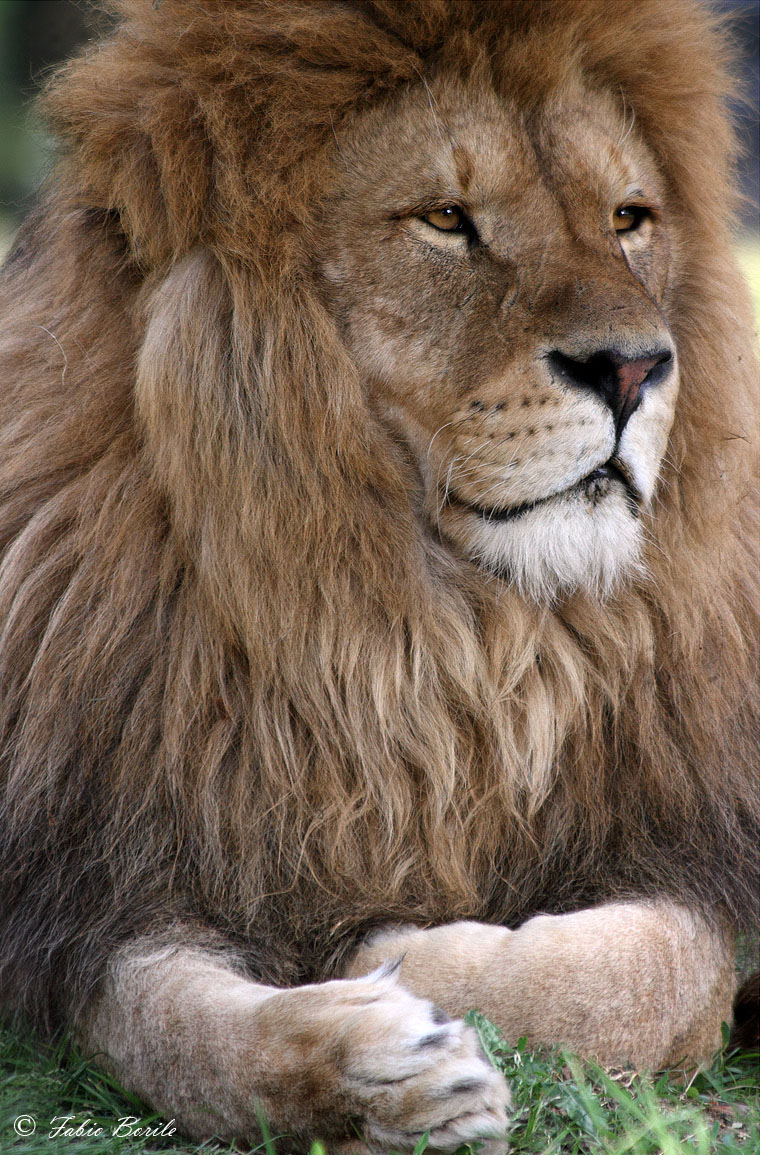 leone...