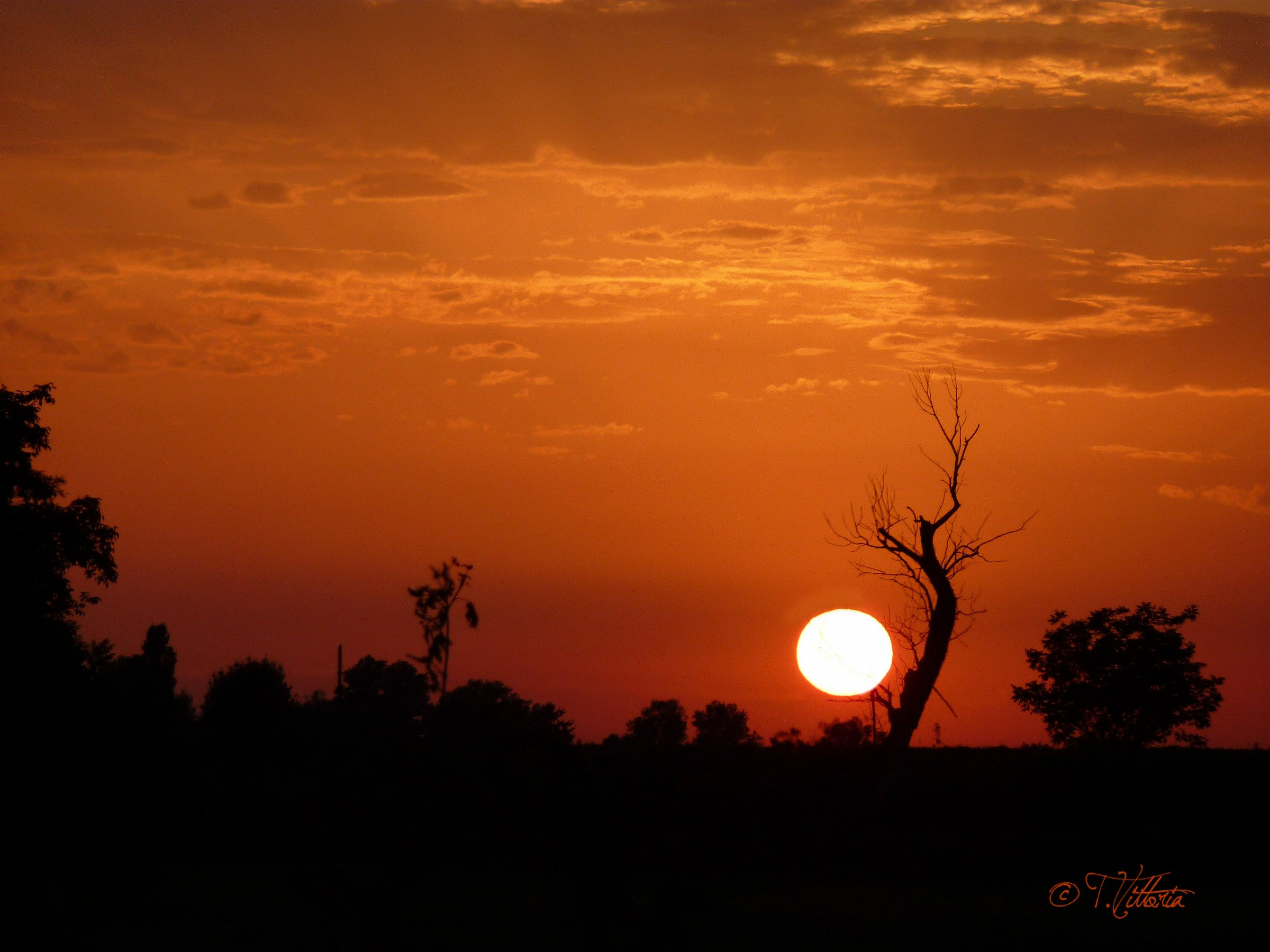 Sunset with tree...
