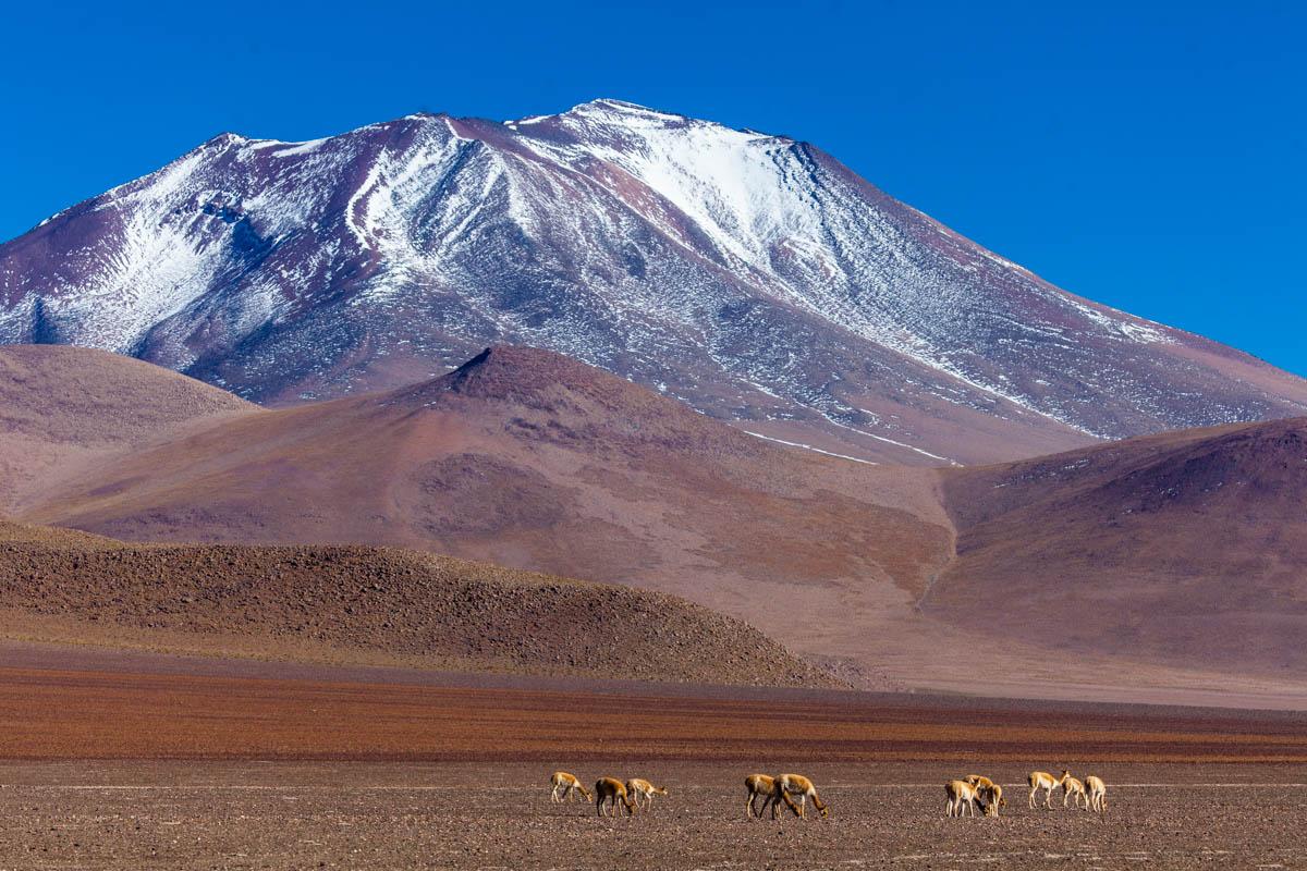 Bolivian alturas...