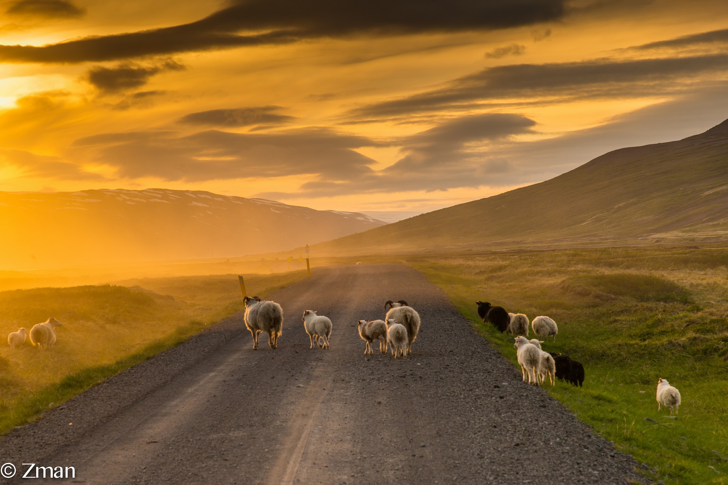Sheep Crossing The Dirt Road...