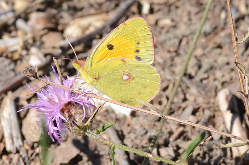 3rd Butterfly...