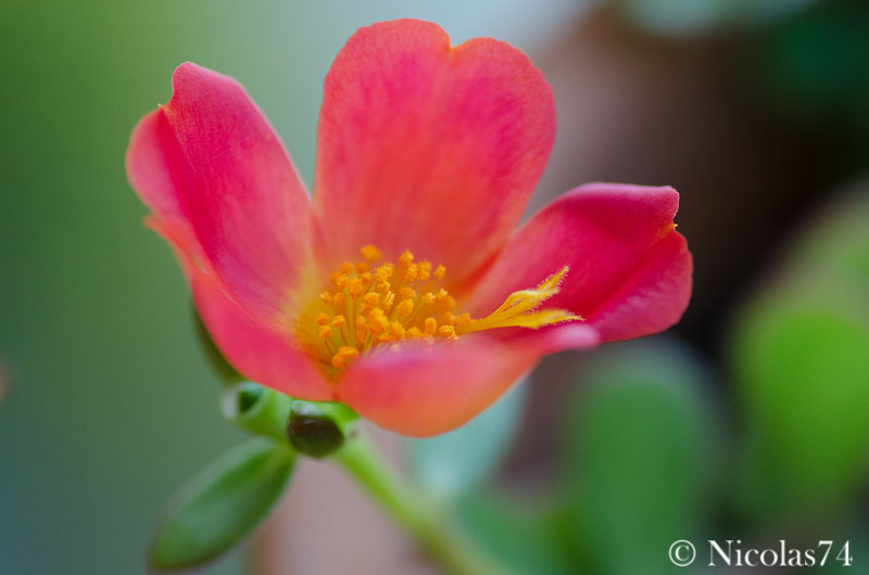 Flower succulent plant...
