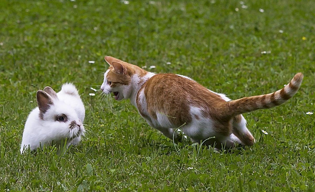 Coco attacks Leone (are playing)...