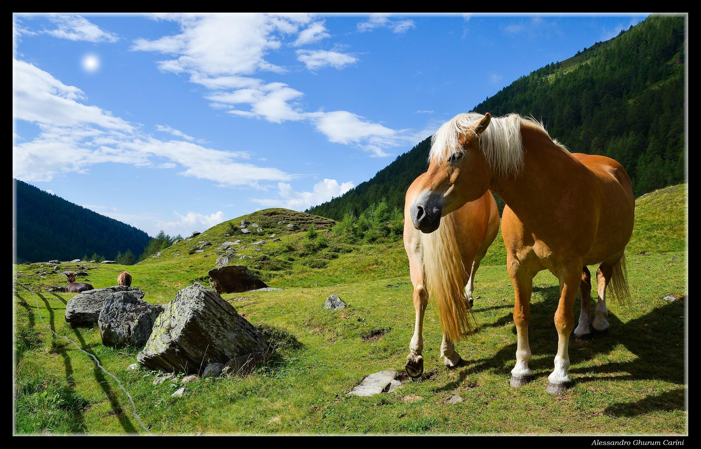 Horse Grazing...