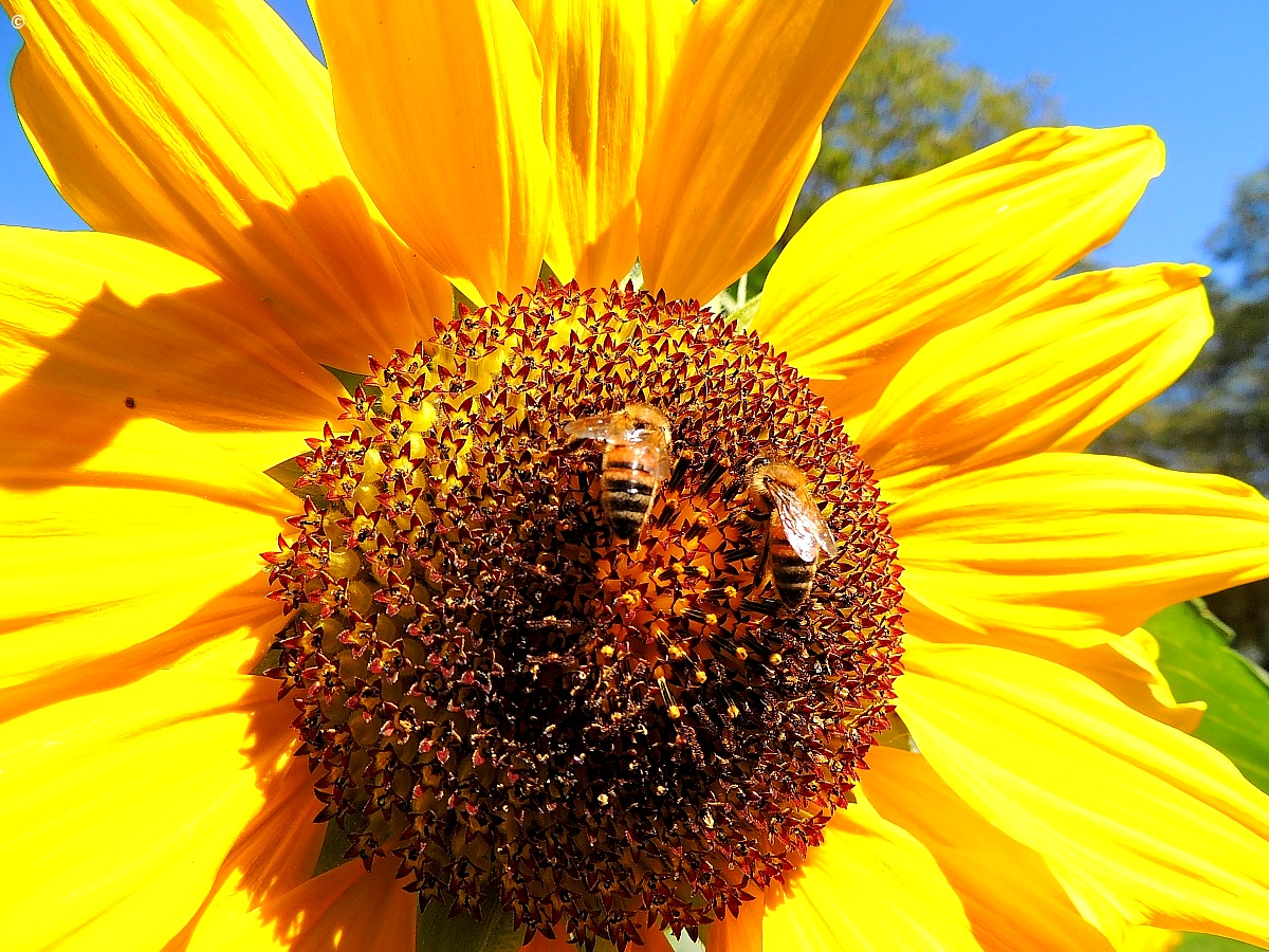 bees at work...