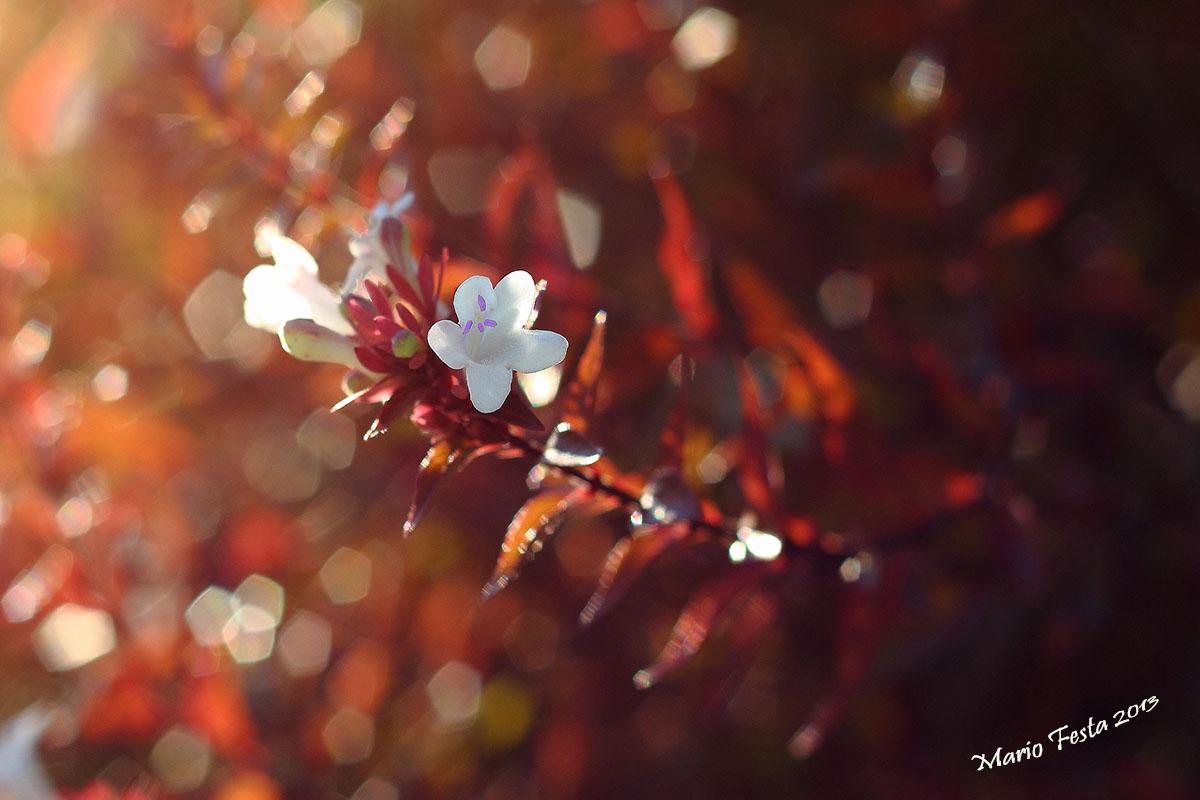 White floret...