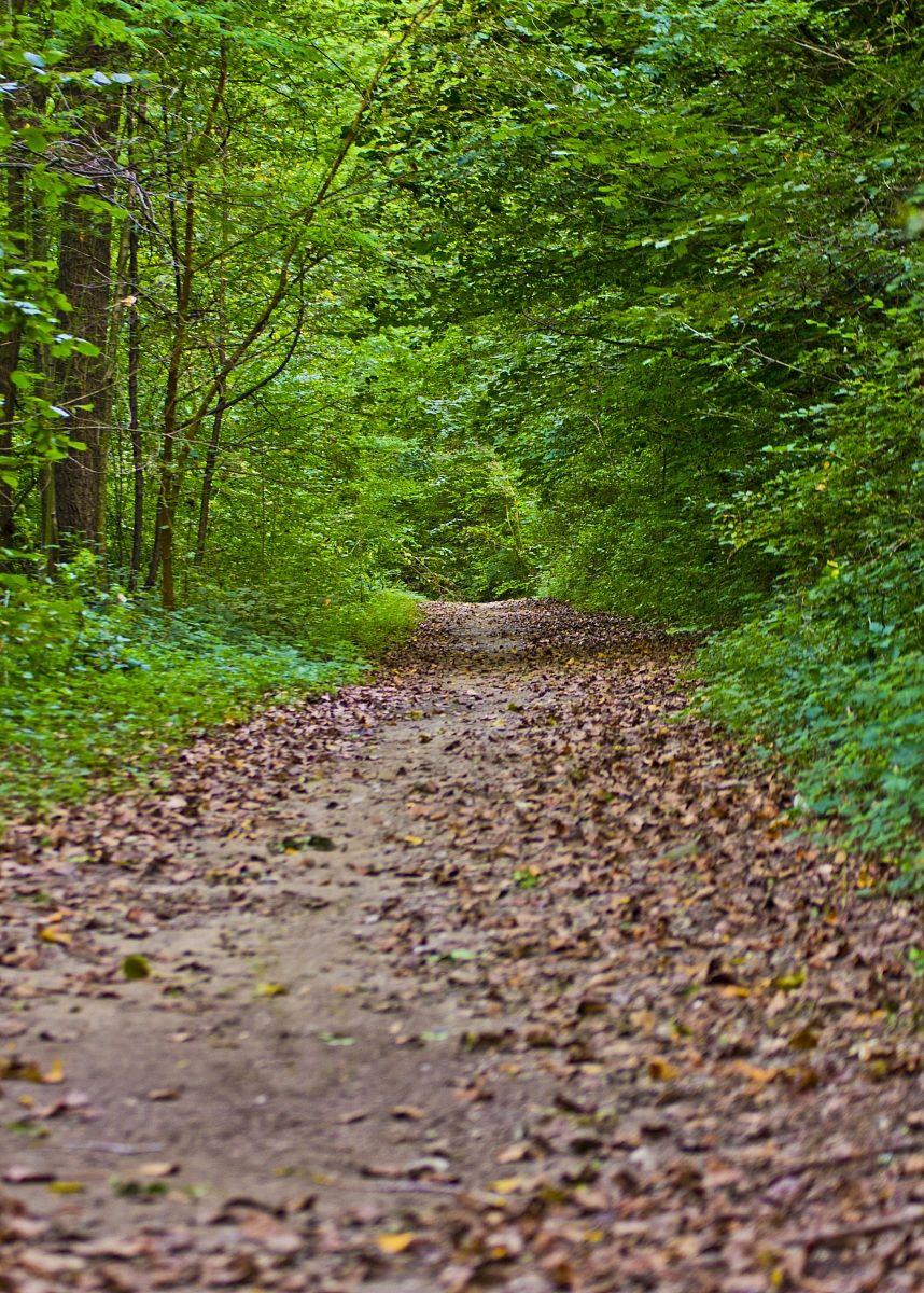 Paths .....