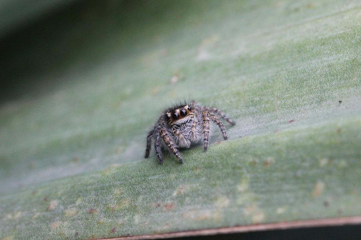 Spider 1...