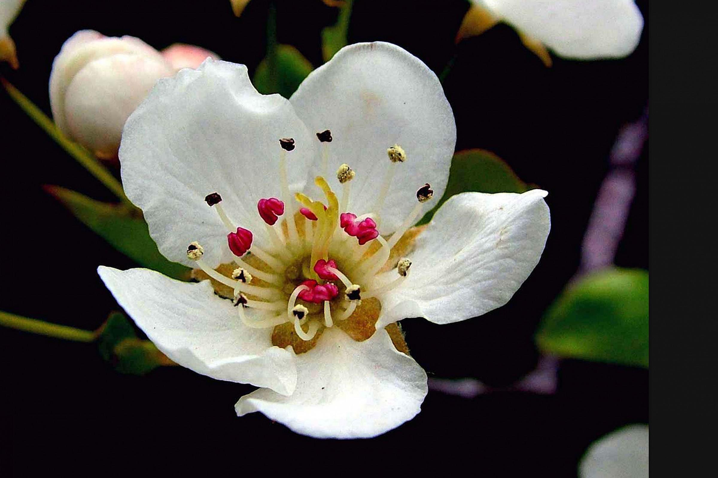 flower mpero...