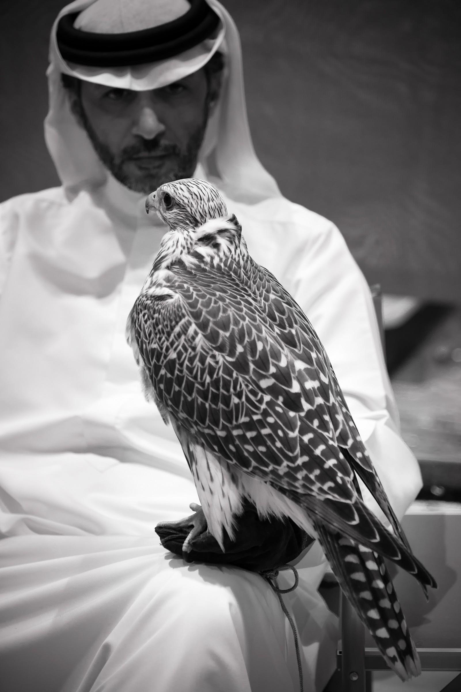 Falconeria negli Emirati...