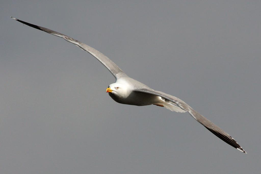 The Flight I...