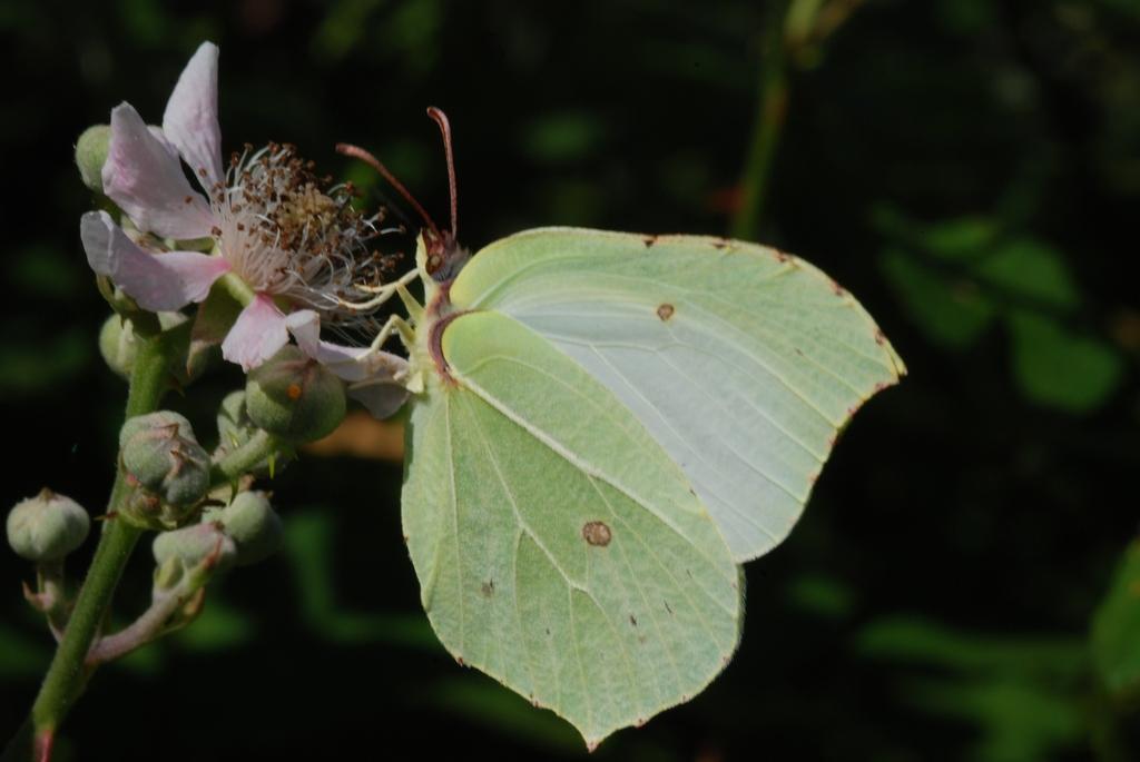 butterfly on flower...