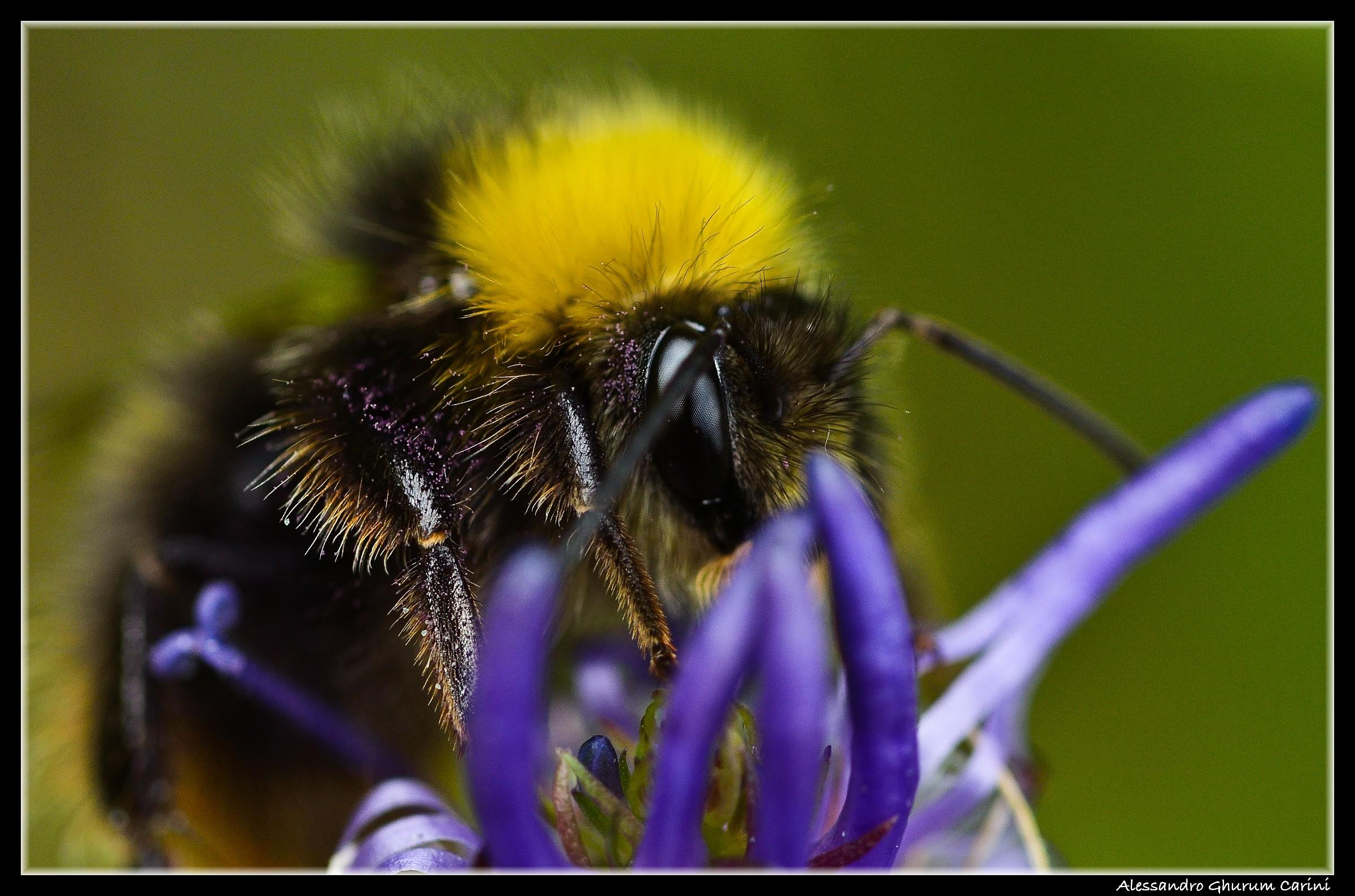 Bee's eyes...