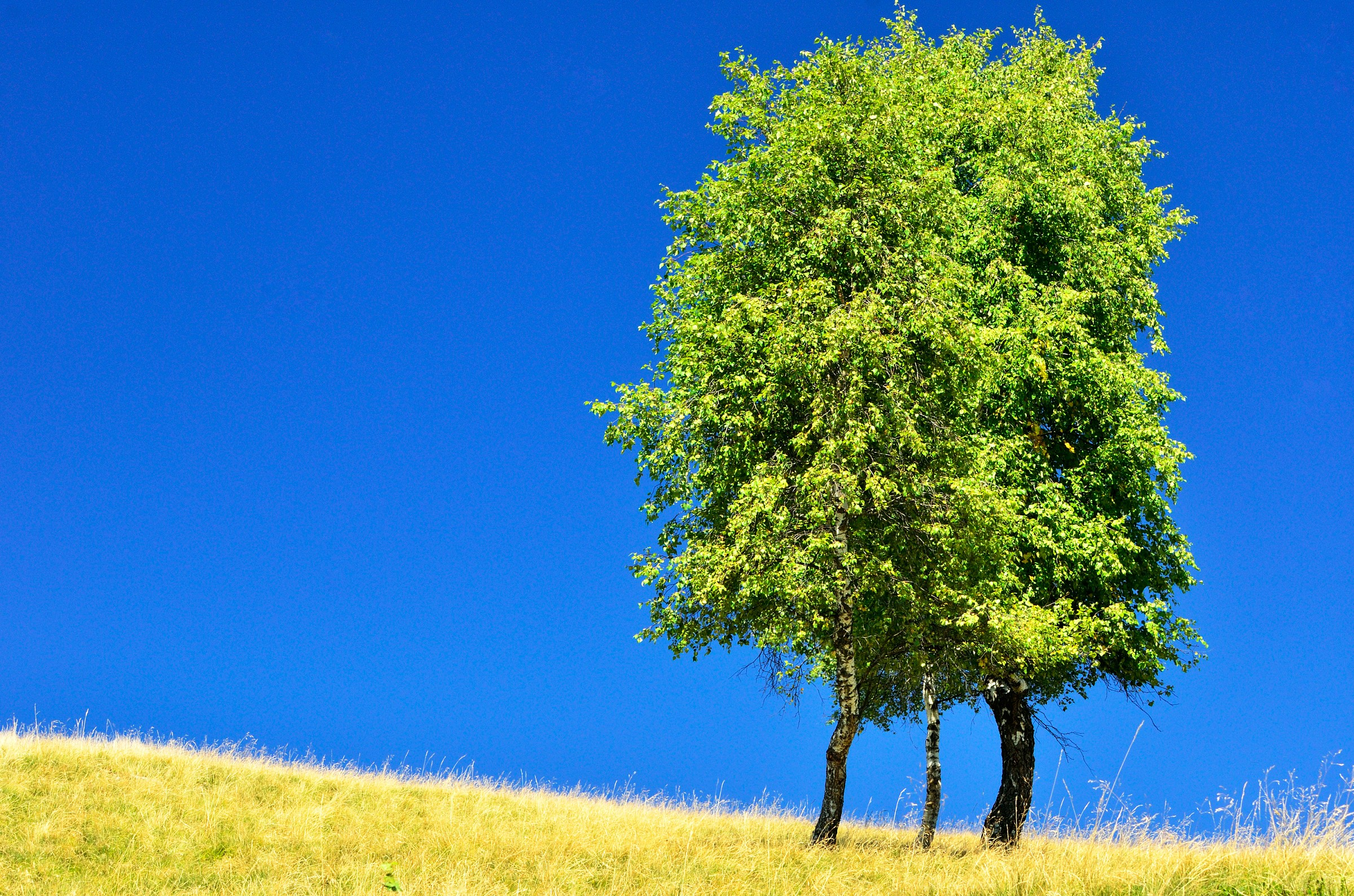 Tree in the deep blue...