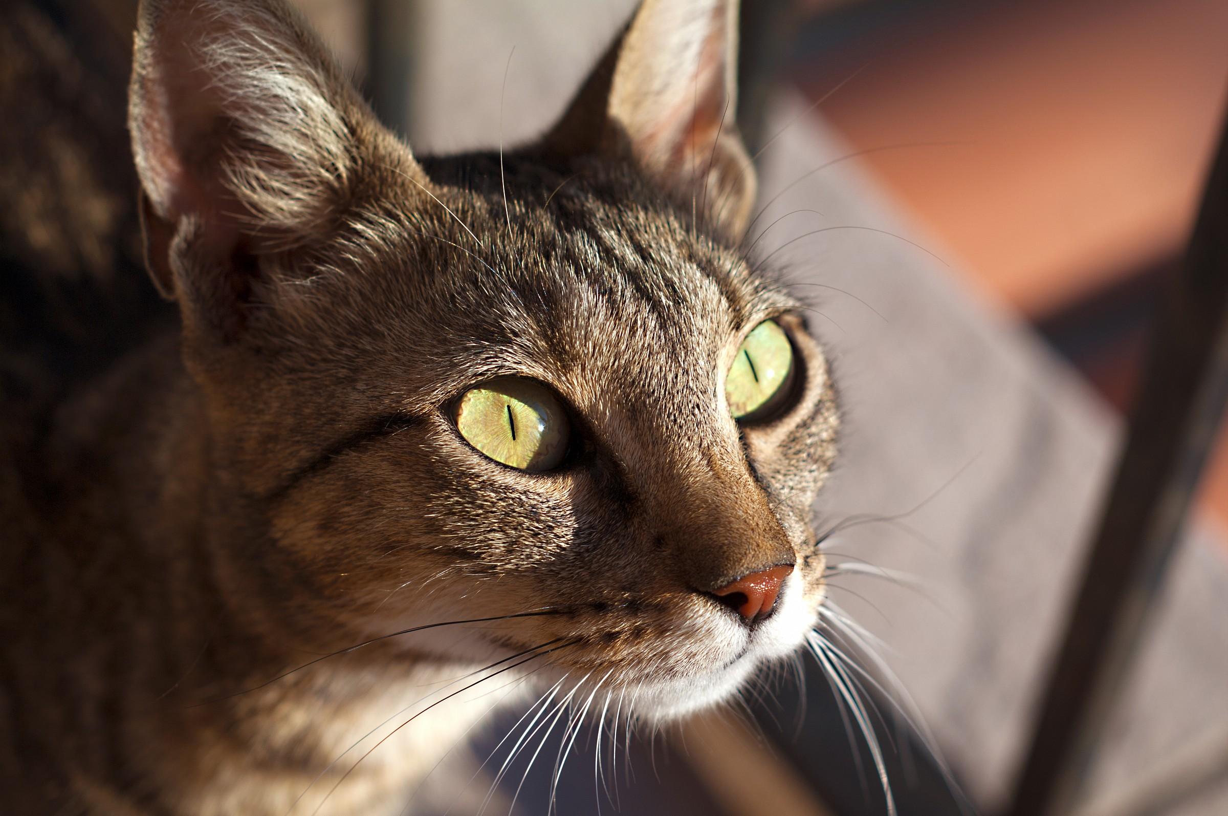 Sguardo felino...