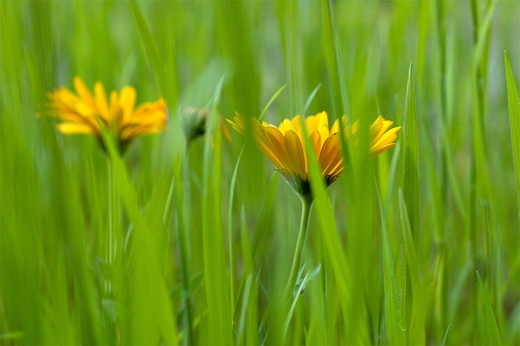 2 daisies...