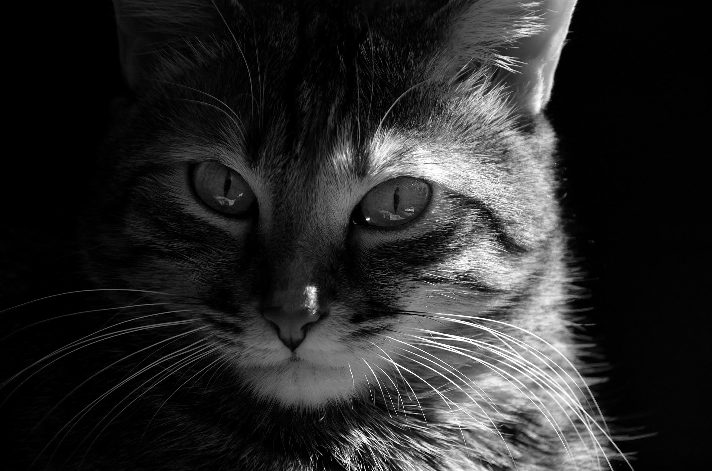 Lilli black and white...