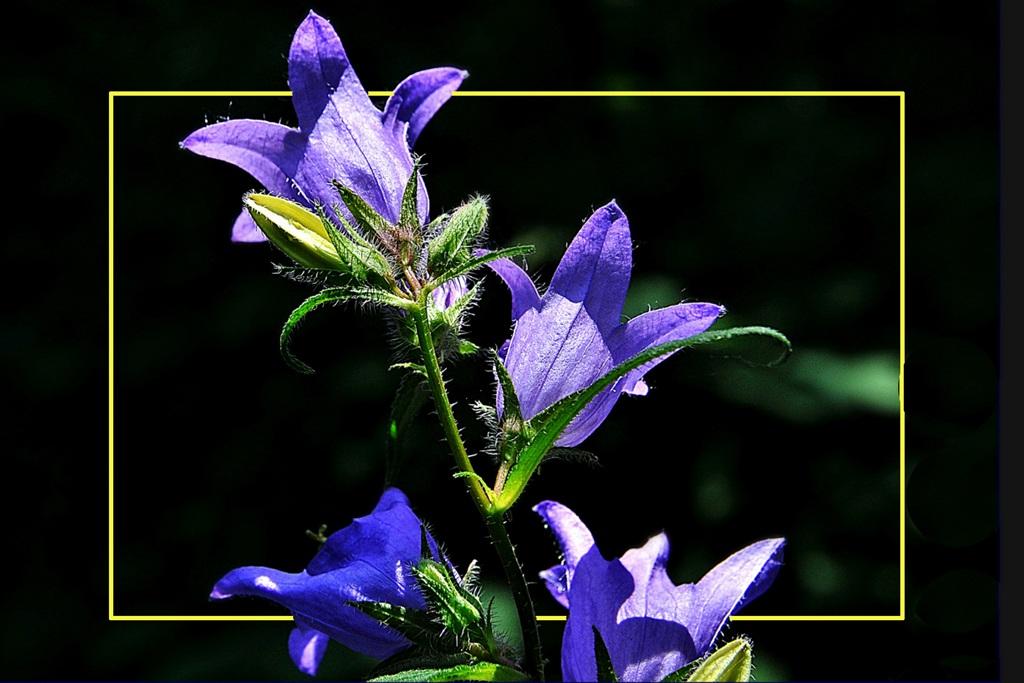 flower nettle...
