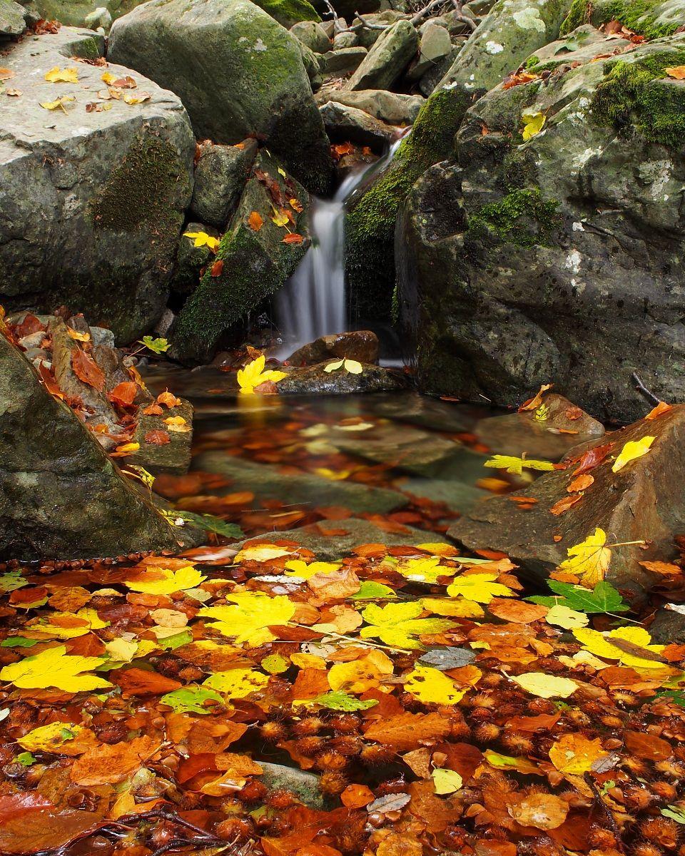 Leaves drifting ......