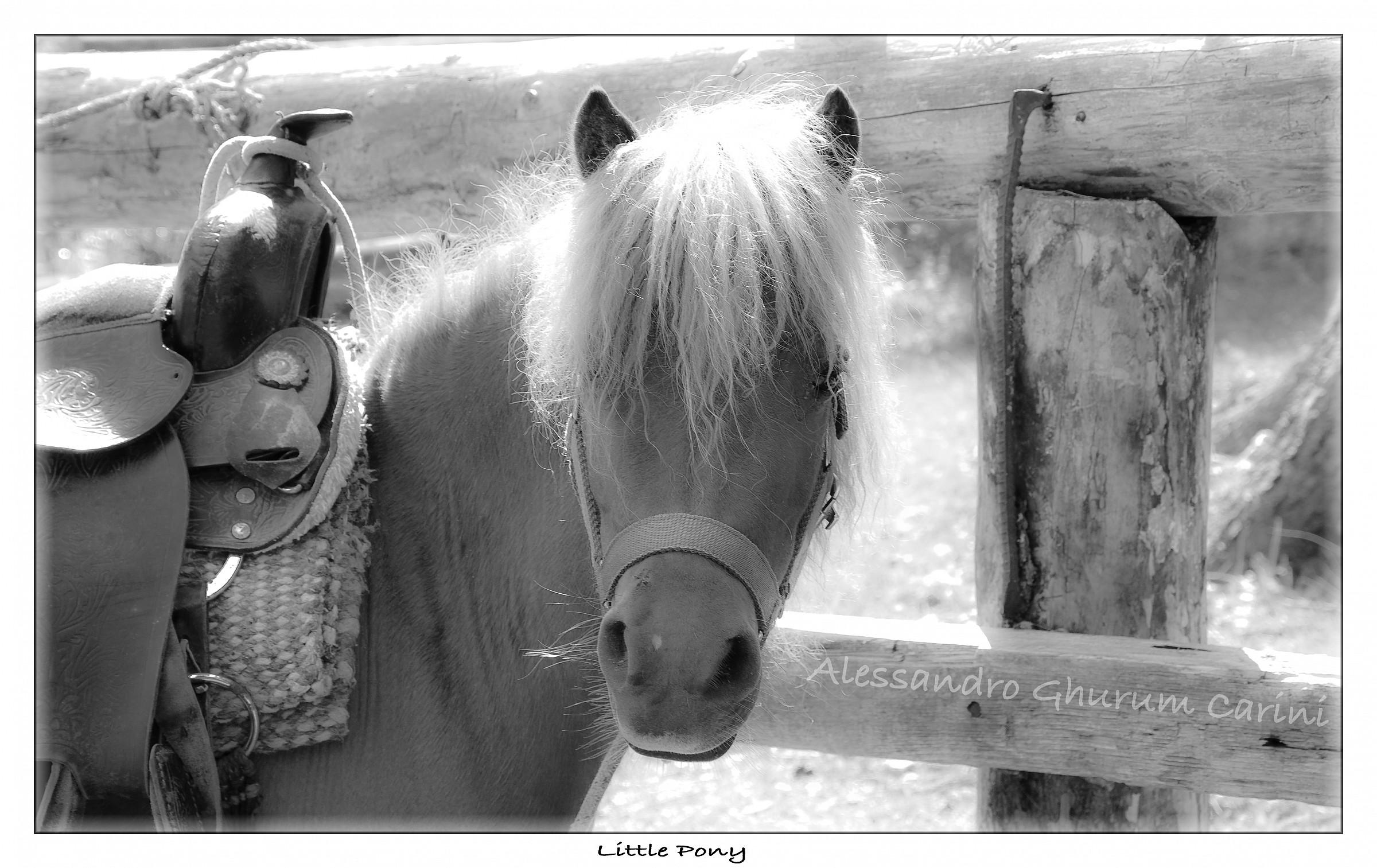 Little pony...