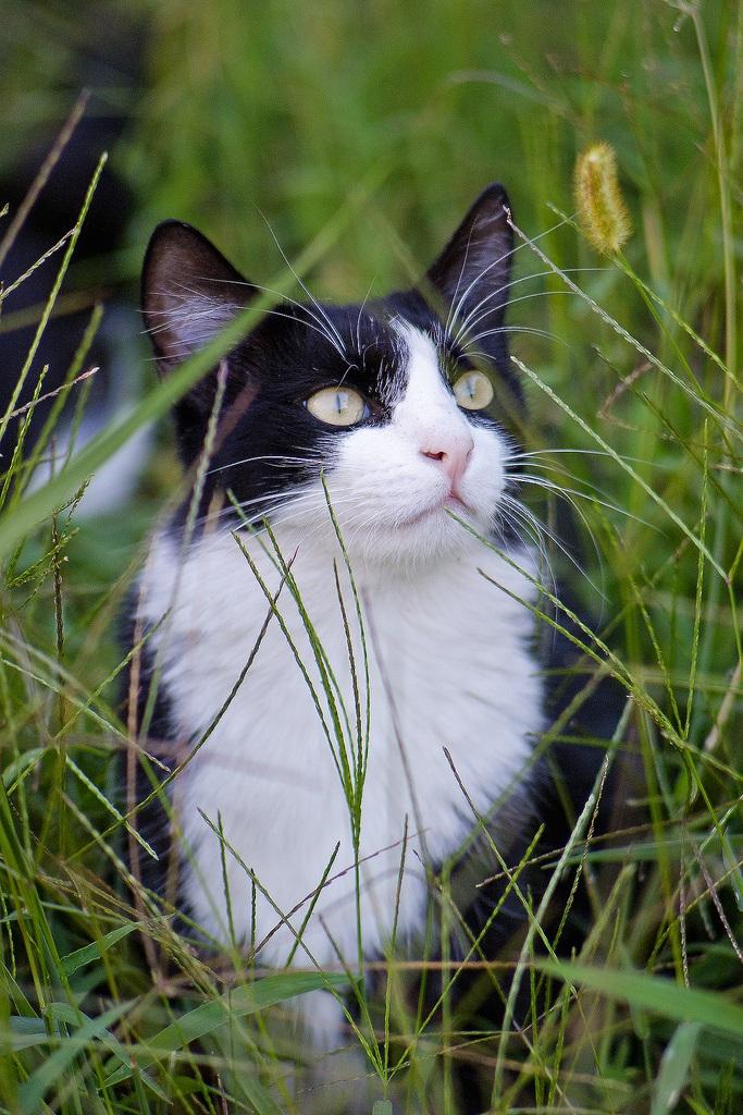 Nell'erba...
