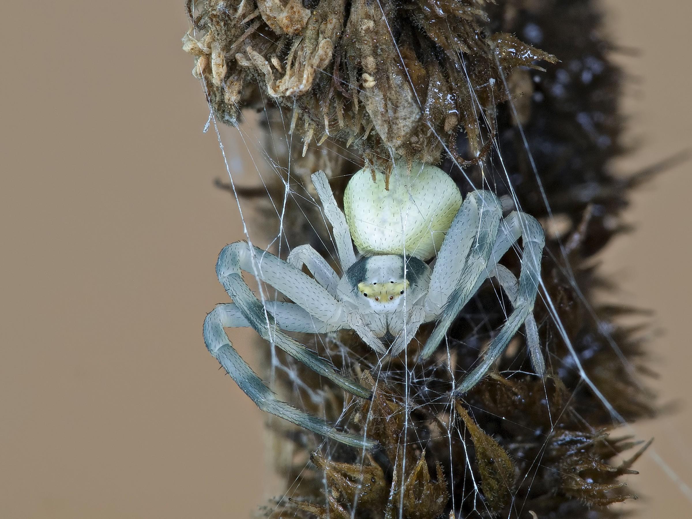 spider mite...