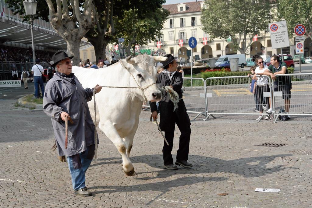 the bull...