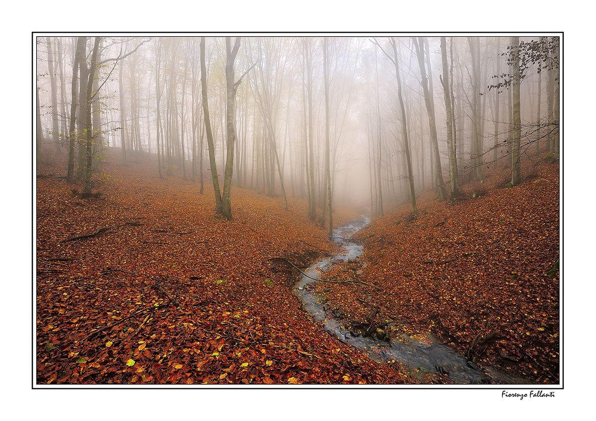 Enchanted woods...