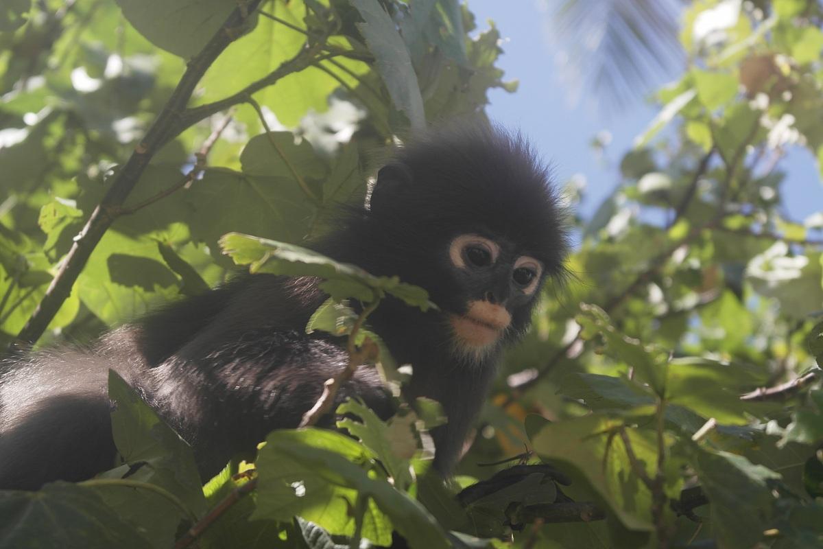 scimmietta...