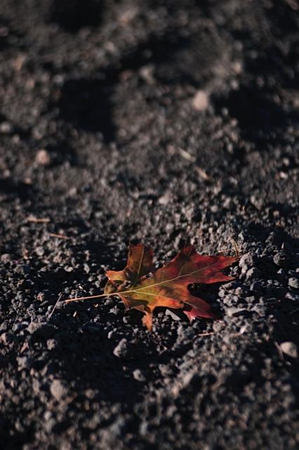 L'anima dell'autunno .....