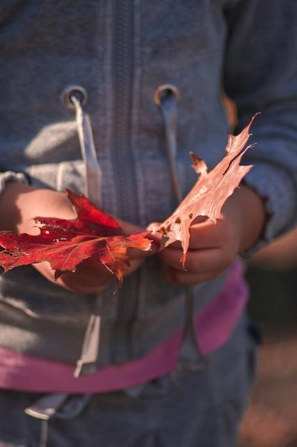 Dettagli d'autunno .....