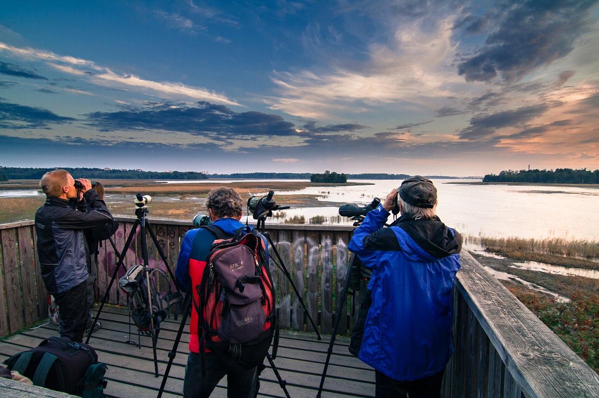 Birdwatchers...