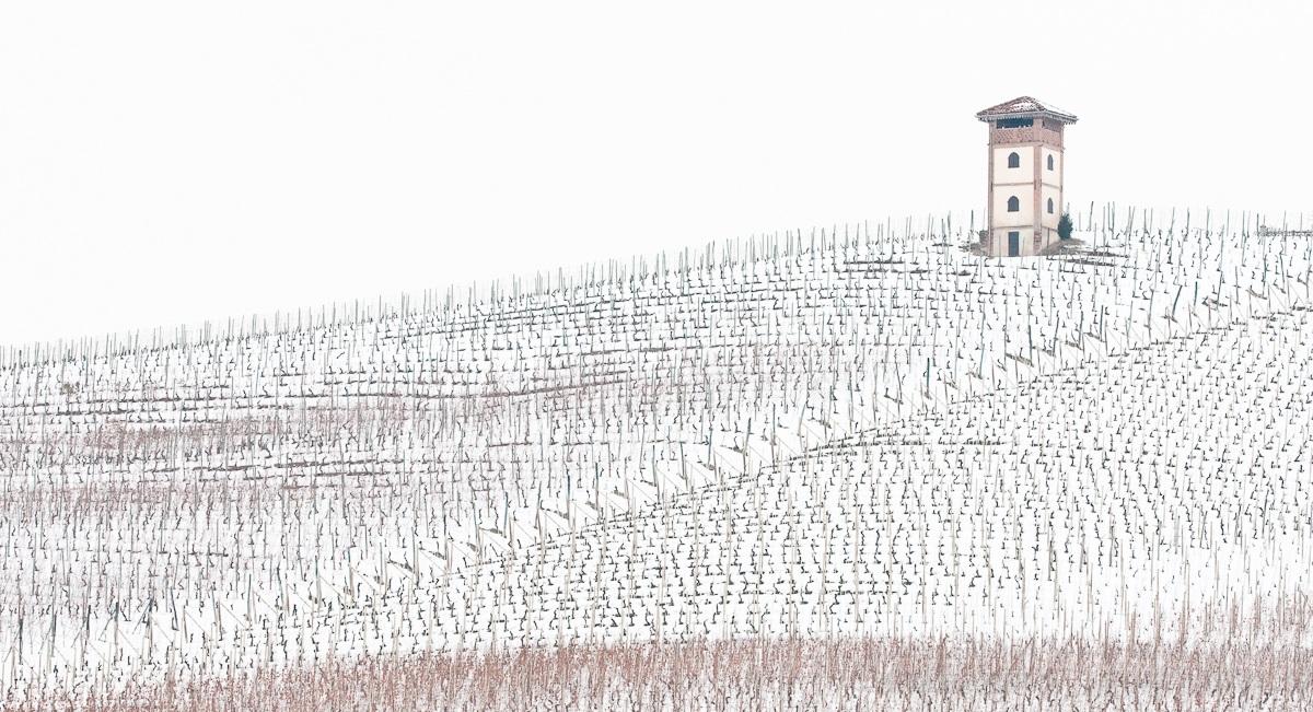 vineyard in winter...