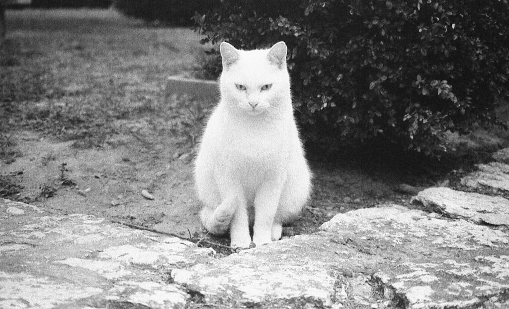 A White Ghost In My Garden...