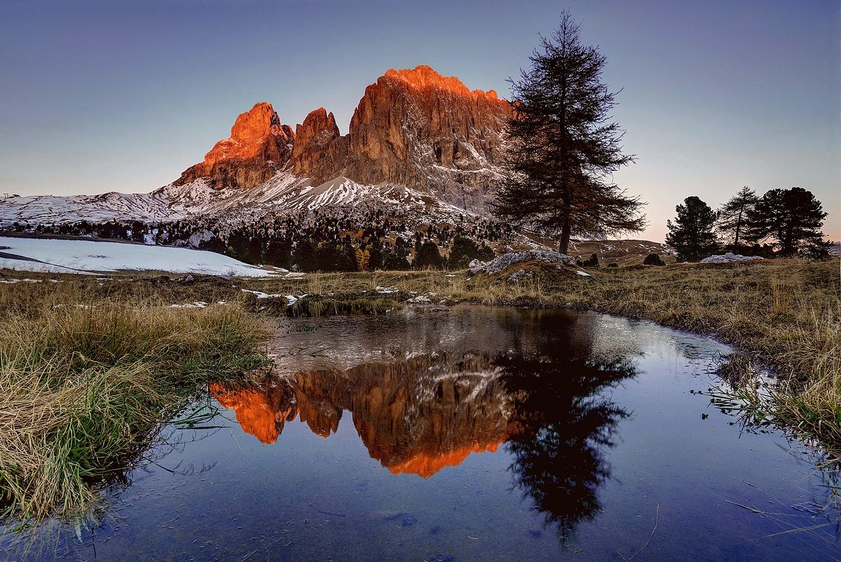 The larch...