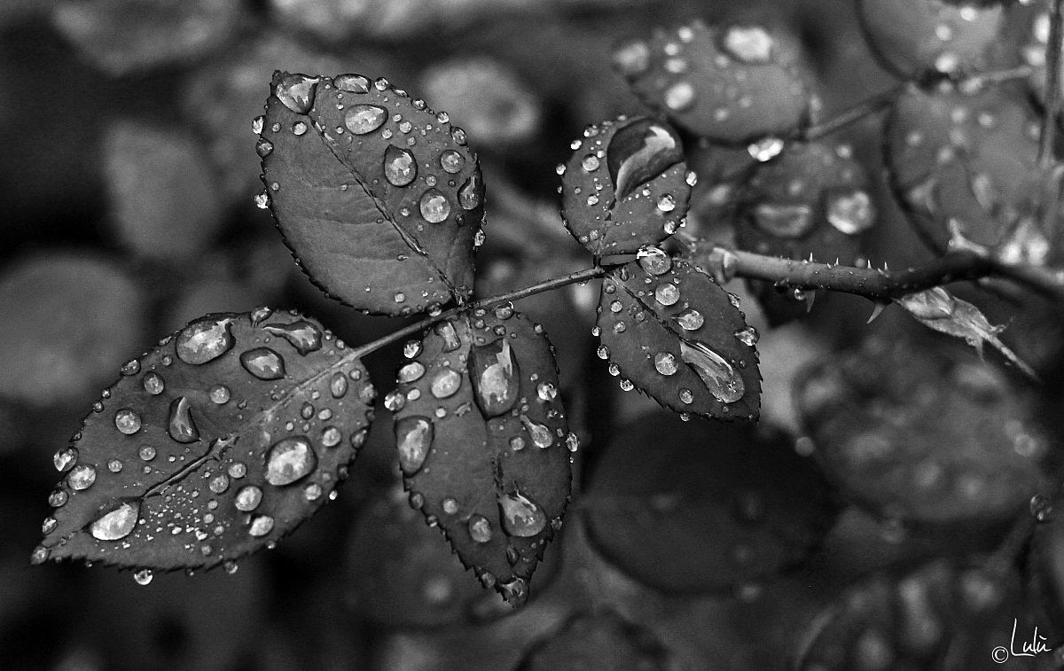 Like drops of water...
